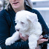 Mabel, the English sheepdog puppy, with Alison