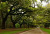 Boone Hall Plantation 001