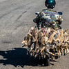 The Moped Duck Carry