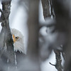 Winter wildlife in the Chilkat Valley, Haines, Alaska