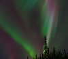 Aurora, Green/Red with Tree Silhouettes by Erich1B