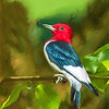 Red-Headed Woodpecker with Art