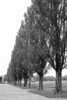 These trees stand as silent witnesses to the atrocities that were carried out at Dachau.