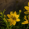 07_11_12YellowFlowers_6