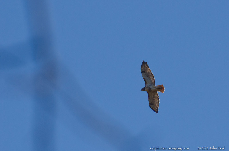 (14Nov12)  red tail hawk (?), boundary waters park.  one year ago.  f/11, 1/1000s, iso 800.
