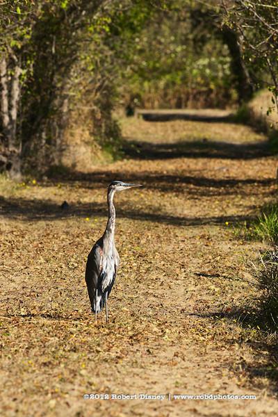 Fall Heron