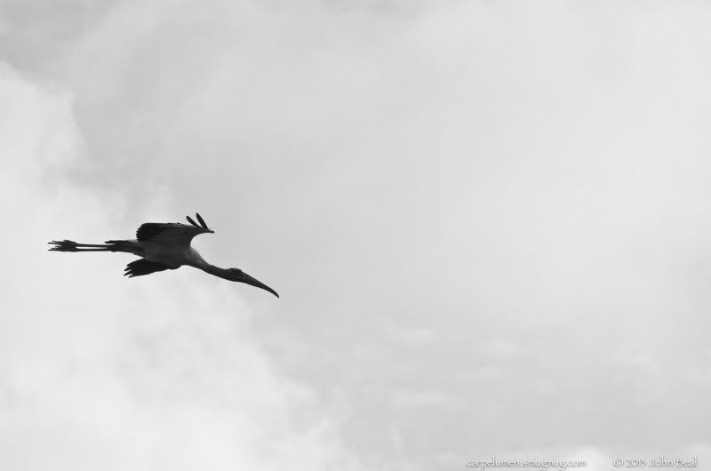 (24Jul13)  wood stork silhouette.  one year ago.  f/11, 1/2500s, iso 800.