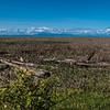 Reifel Island Panorama