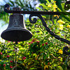 0317 Ring My Bell  Some Cuban greenery for St Pat's Day.  This is from the grounds of Hemmingway's house outside Havana.