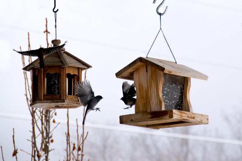 Three Birds in Flight