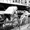 Hansom cabs, Central Park, NYC.