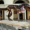 Dinosaur Named Sue at the Field Museum in Chicago