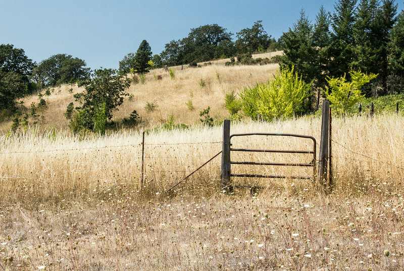 2014 08 18 Mcminnville-6151