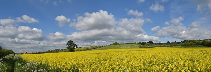 22.05.15 - Still Yellow<br /> <br /> Many of the fields around here are still bright yellow with the oilseed rape crop, this is a 2 shot photomerge panorama from yesterday afternoon. You can just see the distant cathedral on the left