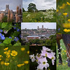 25.05.15 - South Common (2)<br /> <br /> Another collage from my guided photo walk on Lincoln South Common on Saturday I'm afraid. Yesterday was a busy day and was one of those rare times when life got in the way of photography!