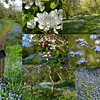 01.05.15 - Blossoms and Blue<br /> <br /> Some more shots from Cross O'Cliff Heritage Orchard