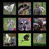 18.03.16 - Birds of Prey  This is a collage from the birds of prey show in the Castle over the weekend