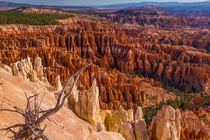 Afternoon at the Amphitheater, Bryce Canyon, Utah.