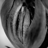 Closed tulip macro