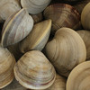 M Clams in Wellfleet