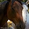 The beauty of the horse is often seen in their eyes. Such kind beautiful creatures.