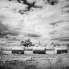 Tommy Thompson Park //14 // Infrared