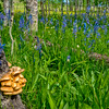 Natural forest floor with mushrooms and wildflowers