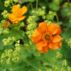 Orange flowers on green