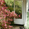 Old screen door and azaleas