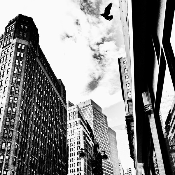 Synchronicity - Bird and Skyscrapers - New York City - By Vivienne Gucwa  Birds have a synchronous relationship with the city.   They fly with such brazen freedom through the man-made caverns soaring above the frenetic flow of the city below.  --
