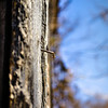A Bent Nail in Barnwood