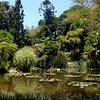 Lily pond at Huntington Library gardens in Pasadena Califronia 11