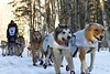 March 1, 2014.  Iditarod!  Allen Moore