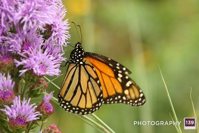 Photo of the Day 0119 - August 29, 2014