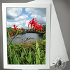 Bridge of Flowers Montbretia FLW009