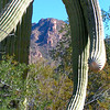 saguaro nat park, dec 8, 2004iSM