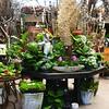 Flower Shop in Old Town in San Diego CA 2