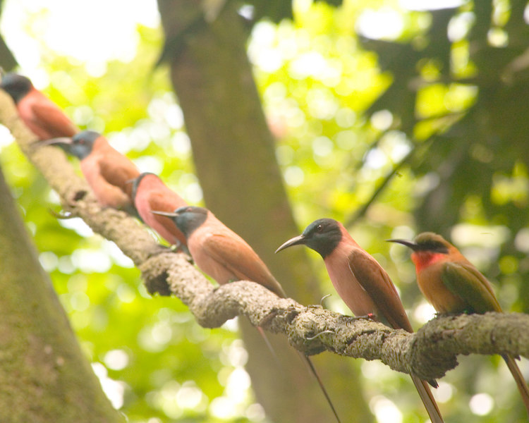 Birds on a Vine<br /> Jurong Bird Park, Singapore Nov 2006<br /> © WEOttinger, The Wildflower Hunter - All rights reserved<br /> For educational use only - this image, or derivative works, can not be used, published, distributed or sold without written permission of the owner.