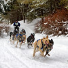 Sled Dog Team 8 Open 2014