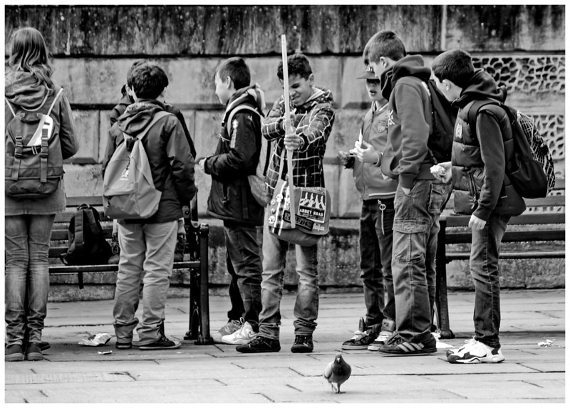 Watch out Pigeon - Abbey Yard Bath
