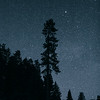 Night Pine Silhouette