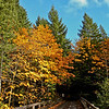 Such beautiful fall colors along the North Santiam river in central Oregon..