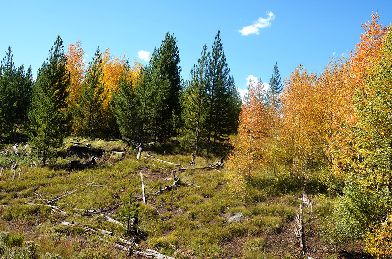 Fall Foilage in Yellowstone National Park in Wyoming