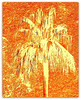 Jill Duncan_burnt orange palm