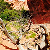 Dead trees rest near Broken Arch III