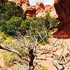 Dead trees rest near Broken Arch I