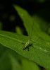Macro World: Katydid