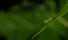 Macro World; katydid