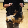 Two Toed Sloth - Walk On The Wild Side 2014 - Fund Raiser for Wildlife Haven