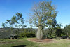 23/06/2014 - Rest area on The New England Highway, Mt Kynoch, Toowoomba.